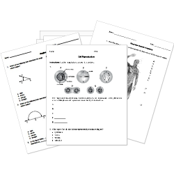 math worksheet : printable and online k 12 tests and worksheets : Standard 1 Mathematics Worksheet Trinidad